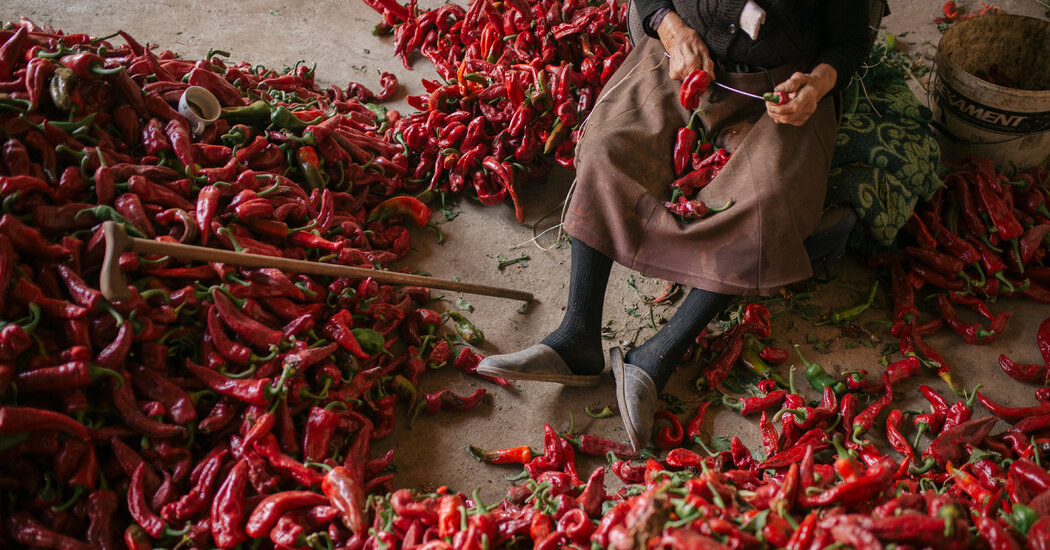 How Peppers Proliferated Around the Planet